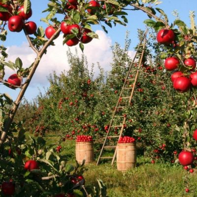 What is Sustainable Food?