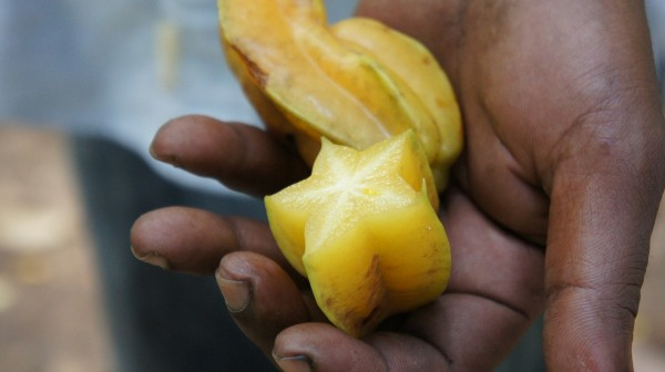 star fruit in hand