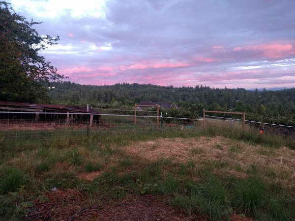 The farm with pink sunset