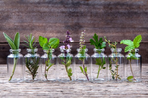 plants in essential oil bottles