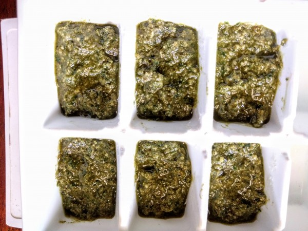 pesto in ice cube trays, ready to go in the freezer.